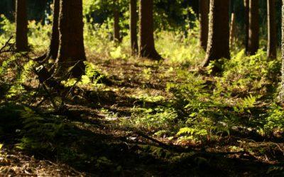 Uzemnění asebepropojení – dar přítomnosti, vnitřní síly aosobní svobody